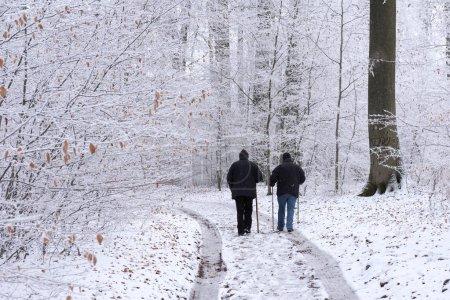 Photo pour Vue arrière des marcheurs dans la forêt enneigée - image libre de droit