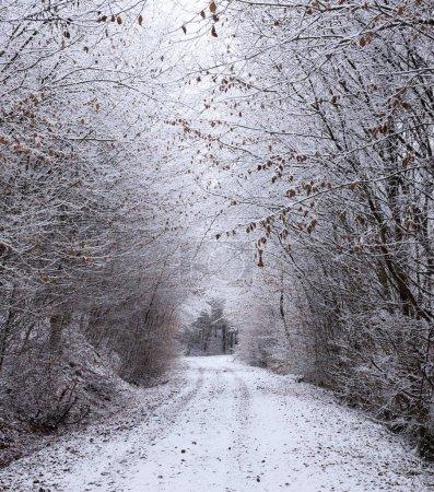 Photo pour Perspective décroissante vue du sentier couvert de neige dans la forêt d'hiver - image libre de droit