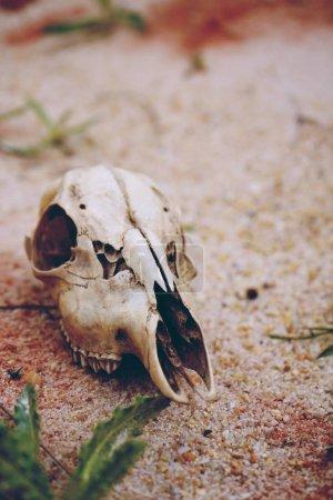 photo of Animal skull in dried desert environment
