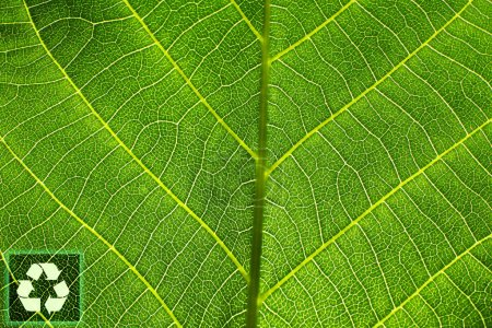 Closeup view of green leaf with recycling symbol. Save nature and environment
