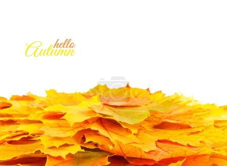 Photo pour Automne fond avec des feuilles colorées. Rouge, orange et vert automne feuilles. - image libre de droit