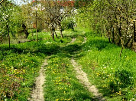 Foto de Sendero en el bosque del resorte verde - Imagen libre de derechos