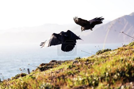 Photo for Freedom fly at landscape - Royalty Free Image