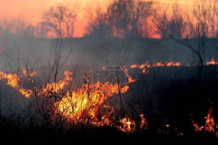 Foto de Burning fire in evening forest - Imagen libre de derechos
