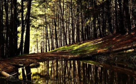 Foto de Forest River in evening time - Imagen libre de derechos