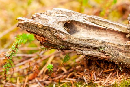 Photo for Close up of wooden branch lying on the ground. - Royalty Free Image