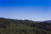 green forest and clear blue sky