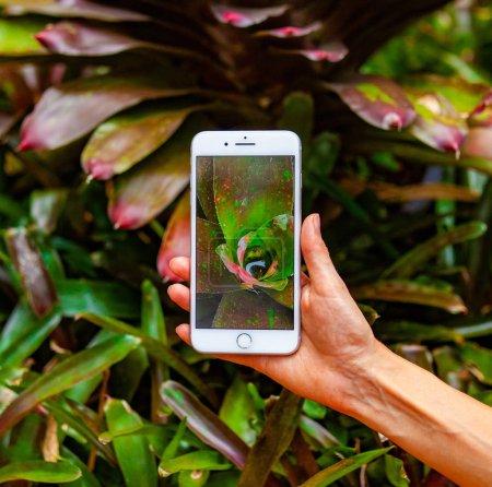 Photo pour Concept de photographie mobile. Femme main tenant smartphone et prendre une photo de fleur d'orchidée violette sur fond bleu vif. Concept de nature. Place pour votre inscription - image libre de droit