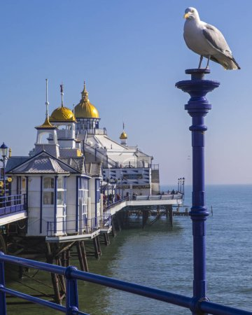 Foto de East Sussex, UK - February 23rd 2019: A seagull perched on the historic Eastbourne Pier in the seaside town of Eastbourne in East Sussex, UK. - Imagen libre de derechos