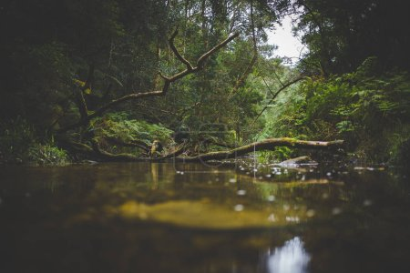 Wide angle landscape photo of the small stream at Jubilee Creek deep in the Knysna forest