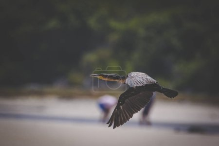 Close up image of bird's flight  on the coast of south africa
