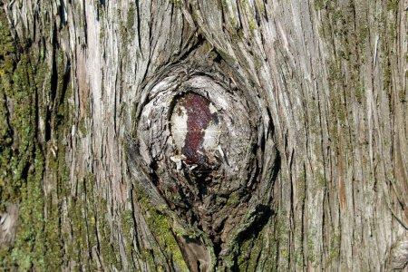 Photo pour Branchement d'arbre coupé sur un tronc - image libre de droit