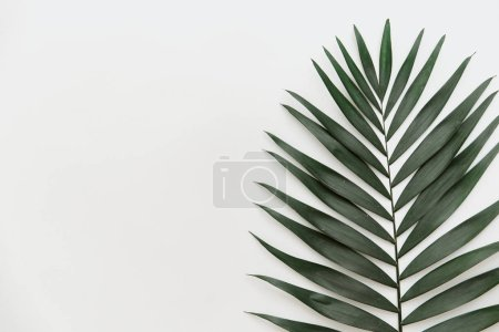 Flat lay summer composition. Creative concept tropical leaf. Top view, copy space
