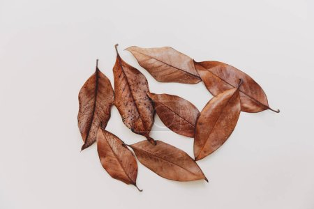 Flat lay autumnal composition. Creative concept brown leaves. Top view, copy space