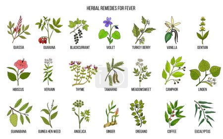 Illustration for Best medicinal herbs for fever. Hand drawn vector set of medicinal plants - Royalty Free Image