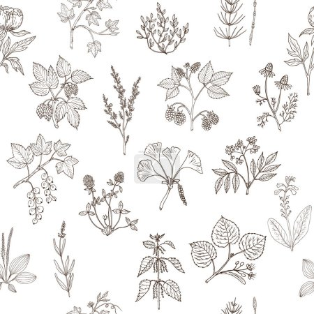 Illustration for Seamless pattern with hand drawn medicinal plants. Vector herbal background - Royalty Free Image