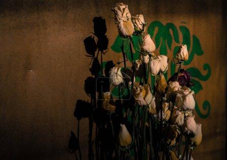 rosas secas con su sombra en la pared