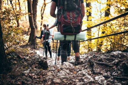 Photo pour Voyageurs tout en trekking avec des sacs à dos sur le sentier rocheux de forêt - image libre de droit