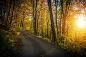 Fall Foliage Scenic Forest Route. Winding Road and the Autumn Scenery.