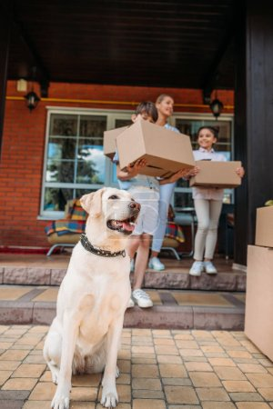 selective focus of labrador dog and family with cardboard boxes on porch of new house, moving home concept
