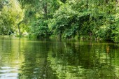 scenic view of beautiful calm lake with green trees on bank
