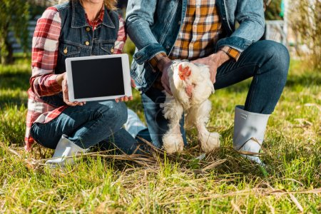 cropped image of woman showing digital tablet with blank screen while her boyfriend holding chicken at farm