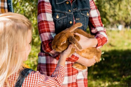 cropped image of little kid touching brown bunny in hands of her mother outdoors