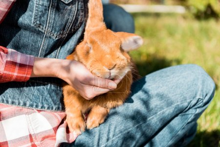 partial view of woman holding adorable brown rabbit outdoors