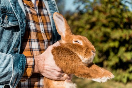 Photo for Partial view of male farmer holding brown rabbit outdoors - Royalty Free Image