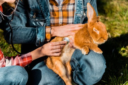 cropped image of male farmer holding rabbit while his girlfriend listening rabbit by stethoscope outdoors