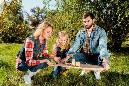 couple of farmers with daughter holding wooden board with adorable baby chicks outdoors