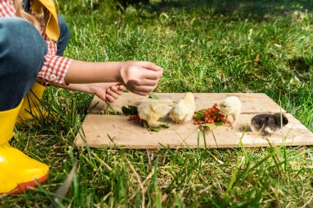 cropped image of little girl feeding baby chicks by rowan on wooden board outdoors
