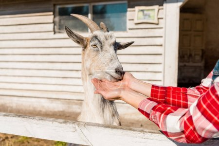 cropped image of woman feeding goat by grass near wooden fence at farm