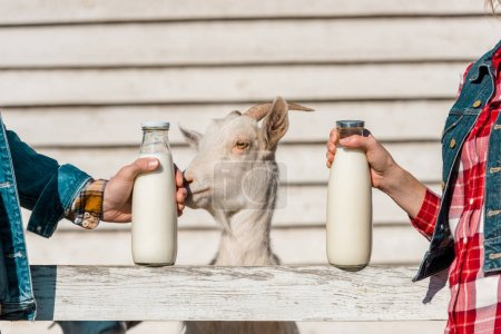 partial view of farmers showing glass bottles of milk while goat standing near wooden fence at farm