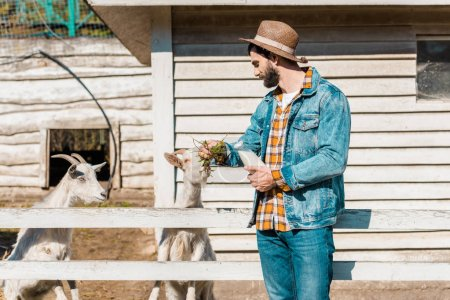 man in straw hat with milk bottle feeding goats by grass near wooden fence at farm