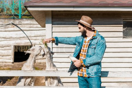 smiling man in straw hat with milk bottle feeding goats by grass near wooden fence at farm
