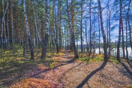 Photo for Forest in spring with beautiful bright sun rays - Royalty Free Image