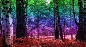 Holographic, rainbow color effect on trees and bushes, city park landscape.