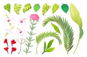 vector tropical plant objects set