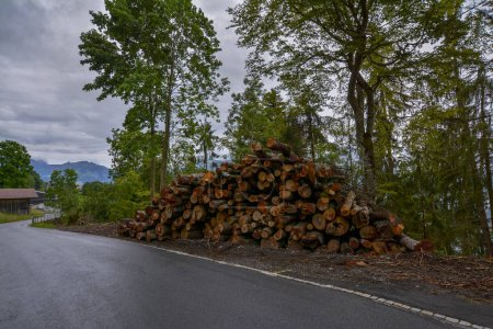 Photo pour Des arbres arrachés étaient empilés sur le bord de la route à Beatenberg, en Suisse, avec une forêt verte en arrière-plan par une journée pluvieuse sous le ciel nuageux spectaculaire. - image libre de droit