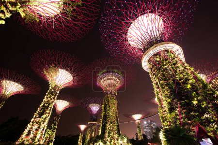 Foto de SINGAPORE - JANUARY 20: Night view of Supertree Grove at Gardens by the Bay on January 20, 2015 in Singapore. Spanning 101 hectares of reclaimed land in central Singapore, adjacent to the Marina Reservoir - Imagen libre de derechos