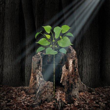 Photo pour Croire et le concept de la foi comme un rayon de lumière qui brille par le haut sur une pousse de plus en plus sur un arbre mort, une idée d'espoir et la spiritualité dans un style d'illustration 3d. - image libre de droit