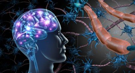 Photo pour Concept d'anatomie des cellules nerveuses cérébrales et du système nerveux en tant que symbole de neurologie humaine et de trouble de la fonction neuronale pour la sclérose en plaques ou la maladie d'Alzheimer avec des éléments d'illustration 3D .. - image libre de droit