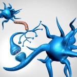 Neuron synapse cells anatomy sending an electrical...