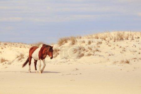 White And Brown Horse on Desert Sand Beach