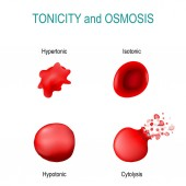 Tonicity is a measure of the osmotic pressure in red blood cells