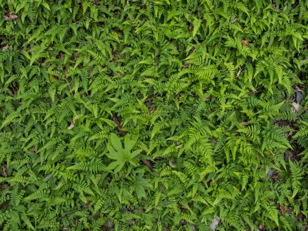 Hojas de helecho verde