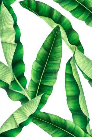 Photo pour Motif sans couture avec des feuilles de banane fraîches. Illustration aquarelle dessinée à la main . - image libre de droit