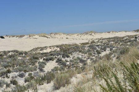 Photo pour Le Parc National Coto de Doñana en Andalousie, Espagne - image libre de droit