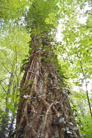 Photo pour Sentier avec feuilles vertes dans la forêt - image libre de droit